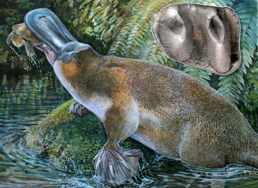 Ilustração oficial divulgada por pesquisadores mostra a espécie recém descoberta. No canto direito, na parte de cima, estão os dentes descobertos.
